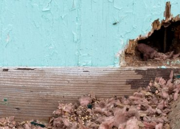 Tips To Pest Proof Your Home